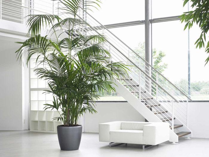 Verzorging hartog palmen - Plante de salon ...