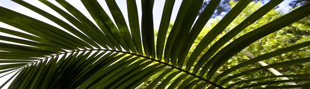 Hartog Palmen